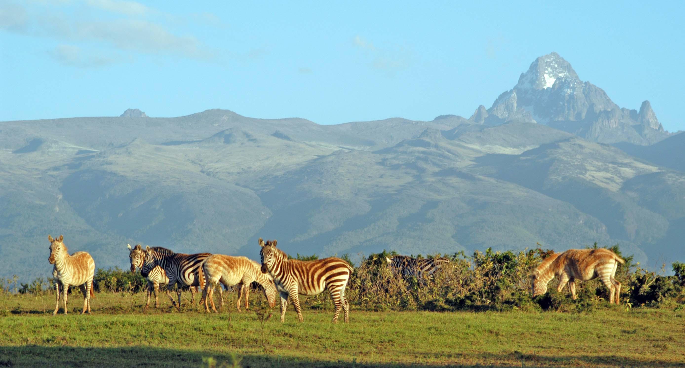 Tour Hà Nội- Nairobi-Aberdares- Nakuru-Masai Mara