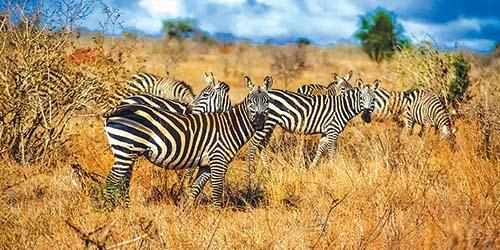Tour Hà Nội – Kenya – Nairobi – Khu bảo tồn Samburu – Vườn Quốc Gia Nakuru – Hà Nội