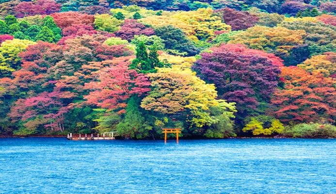 Tour Tp HCM- Tokyo – Osaka - Kyoto - Kobe